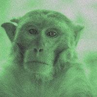 Neuralink: Elon Musk reveals monkey can mind-control video games