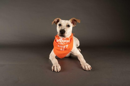 Rumor is one of 70 puppies up for adoption during the 2021 Puppy Bowl.