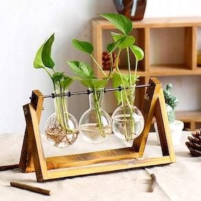 XXXFLOWER Plant Terrarium
