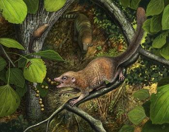 ancient primate shrew