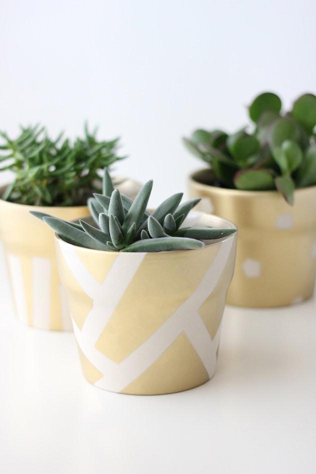gold succulent pots