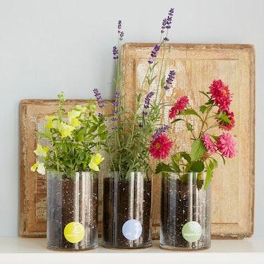 Birth Month Flower Grow Kit