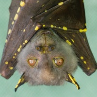 One popular bat Covid-19 theory may actually be true —study