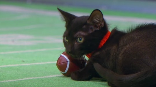 The Kitten Bowl will air on the Hallmark channel on Sunday, Feb. 7 at 2 p.m.