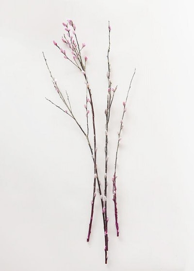 Preserved Pussy Willow Branch Bundle in Pink