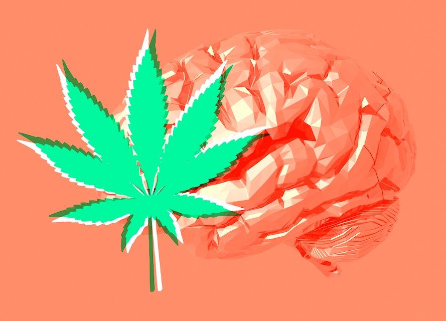 Human brain and cannabis