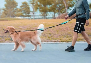 iYoShop Hands-Free Dog Leash with Zippered Pouch
