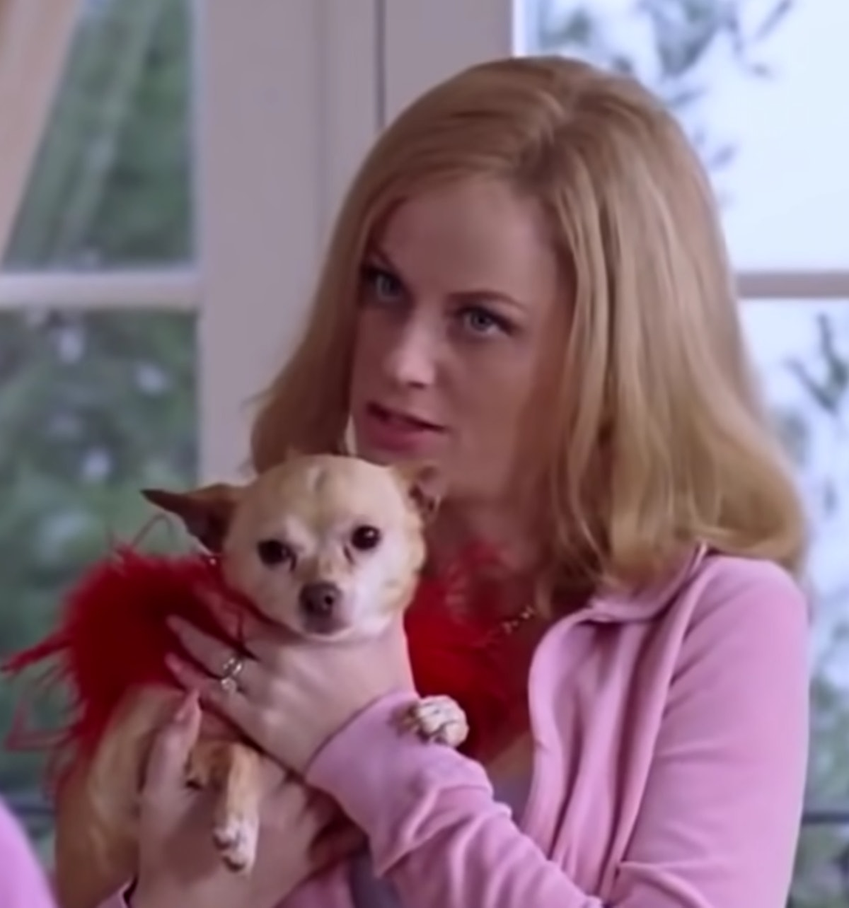 Watch all of Amy Poehler's movies on Galentine's Day.