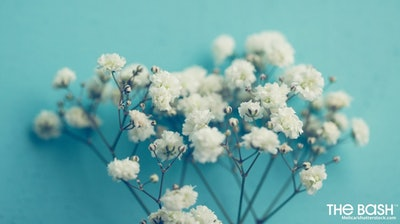 Baby's Breath Zoom Background