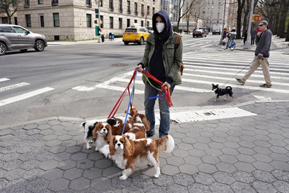 A Dog Walker in New York City Wears a Mask In March 2020.