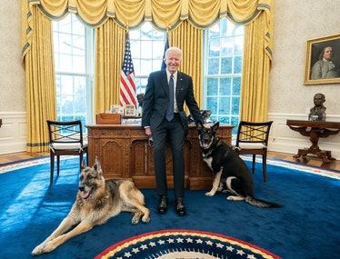Joe Biden in the Oval Office with his dogs