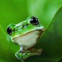 What frogs and your favorite headphones have in common