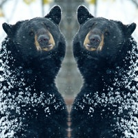 Viral stories like 'Cocaine Bear' reveal a dark side of human nature