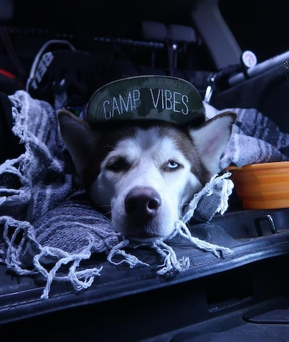 dog camping with hat. Outdoor apps. Hiking apps. Trail apps. iOS and Android apps for hiking.
