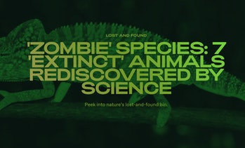 In recent years, several animals — previously thought to be extinct — have been rediscovered, much t...