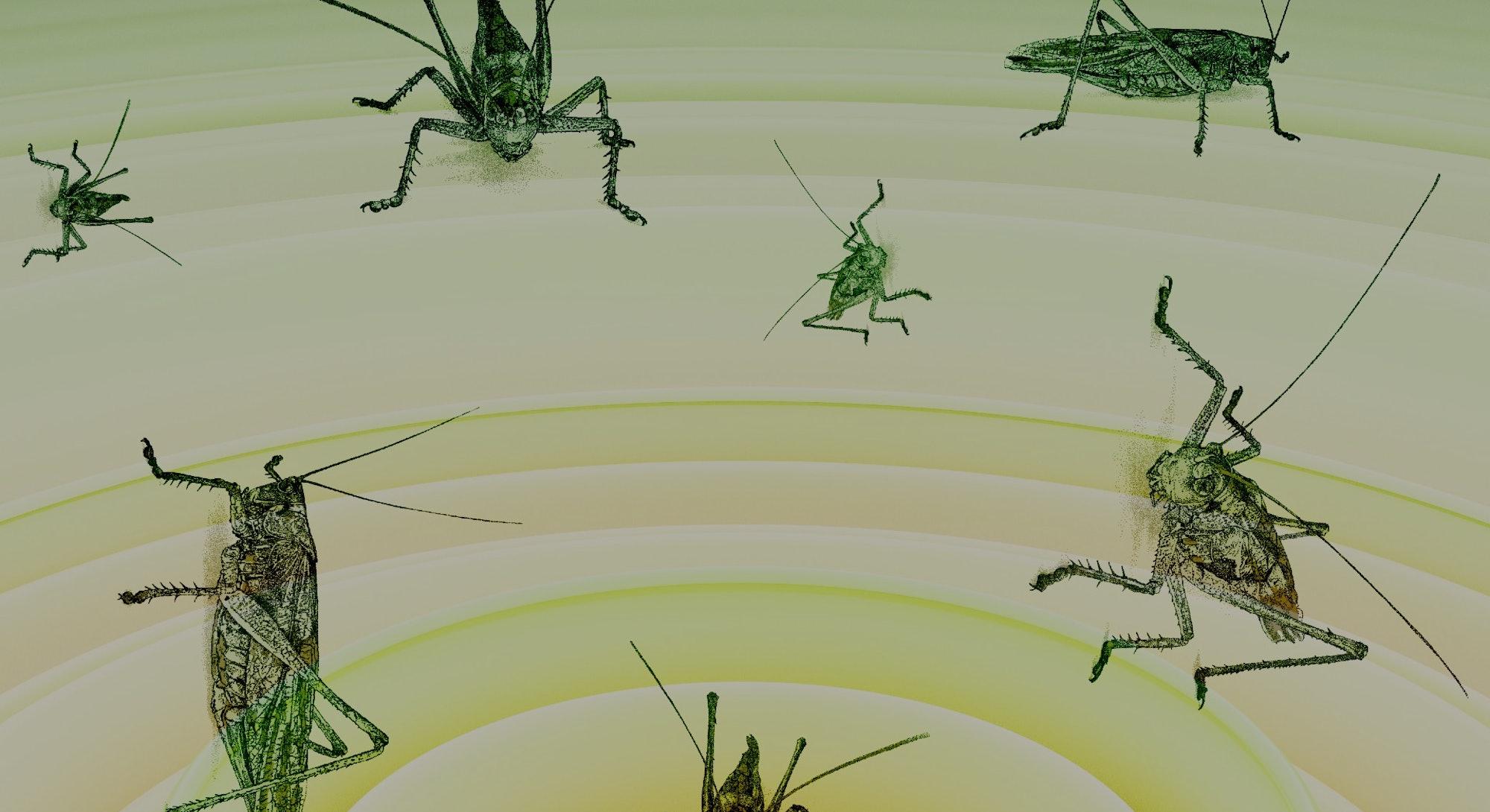 cricket, sound