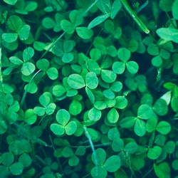 13 St. Patrick's Day Activities For Adults Looking To Celebrate This Holiday Right