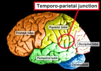 Temporo-parietal junction