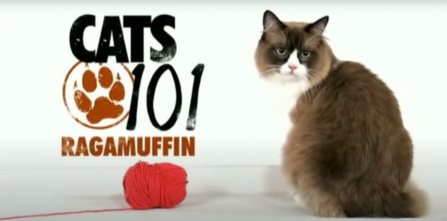 'Cats 101' features different cat breeds every episode.