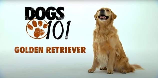 'Dogs 101' features different dog breeds in every episode.