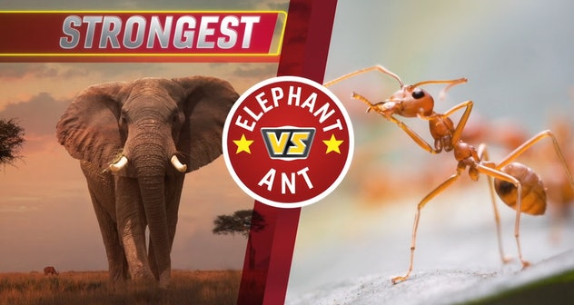 'Animal Showdown' teaches kids about animals by comparing features of different creatures.