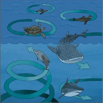Circling sea creatures