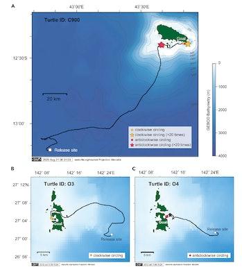 Image of GPS tracks of homing green turtls
