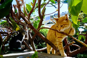 Cats Sitting Under A Plant