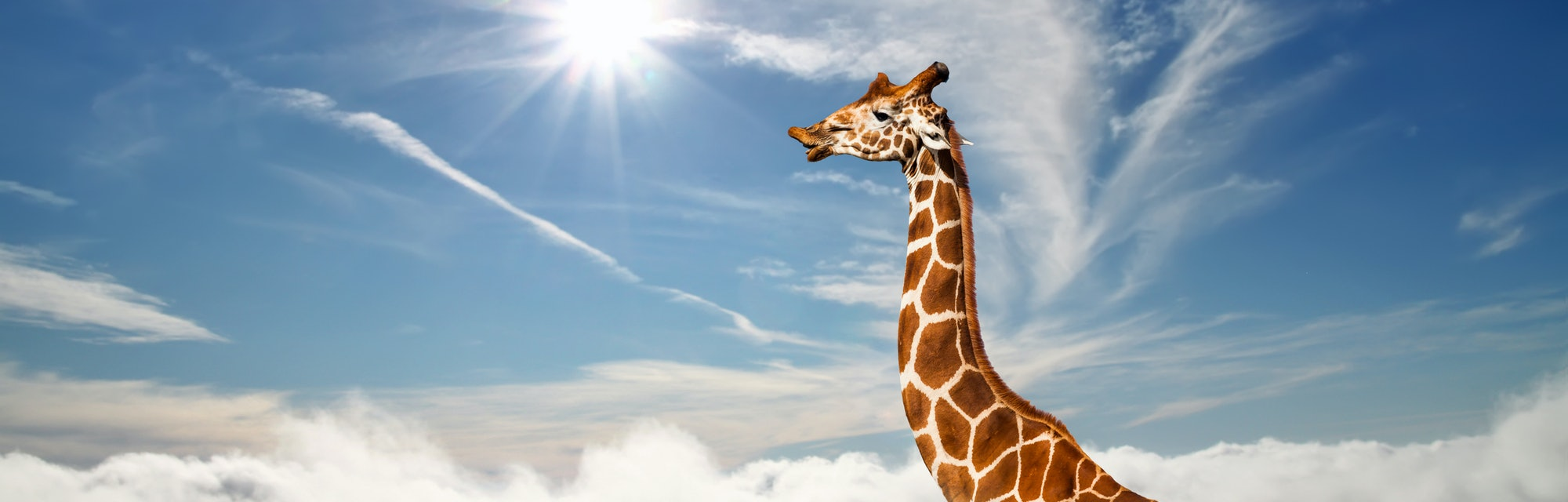 A tall giraffe's neck extends above the clouds.