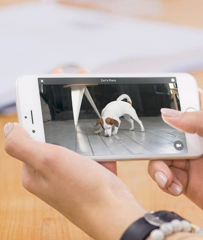 Pet camera view finder