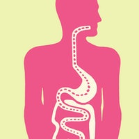 Gut discovery explains another crucial aspect of health