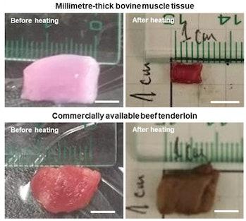 lab grown beef