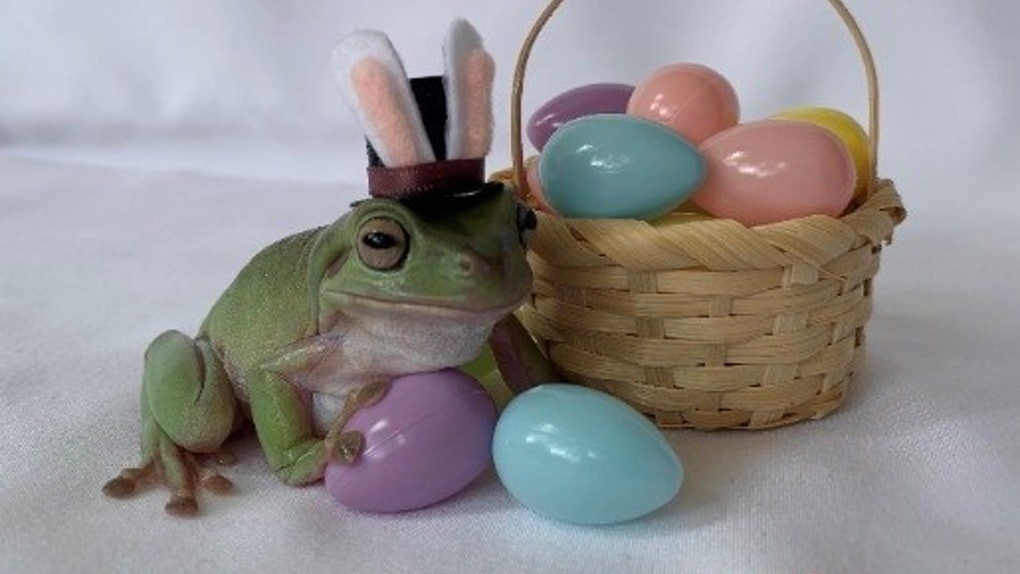 The Cadbury Bunny commercial for 2021 crowned a frog named Betty.