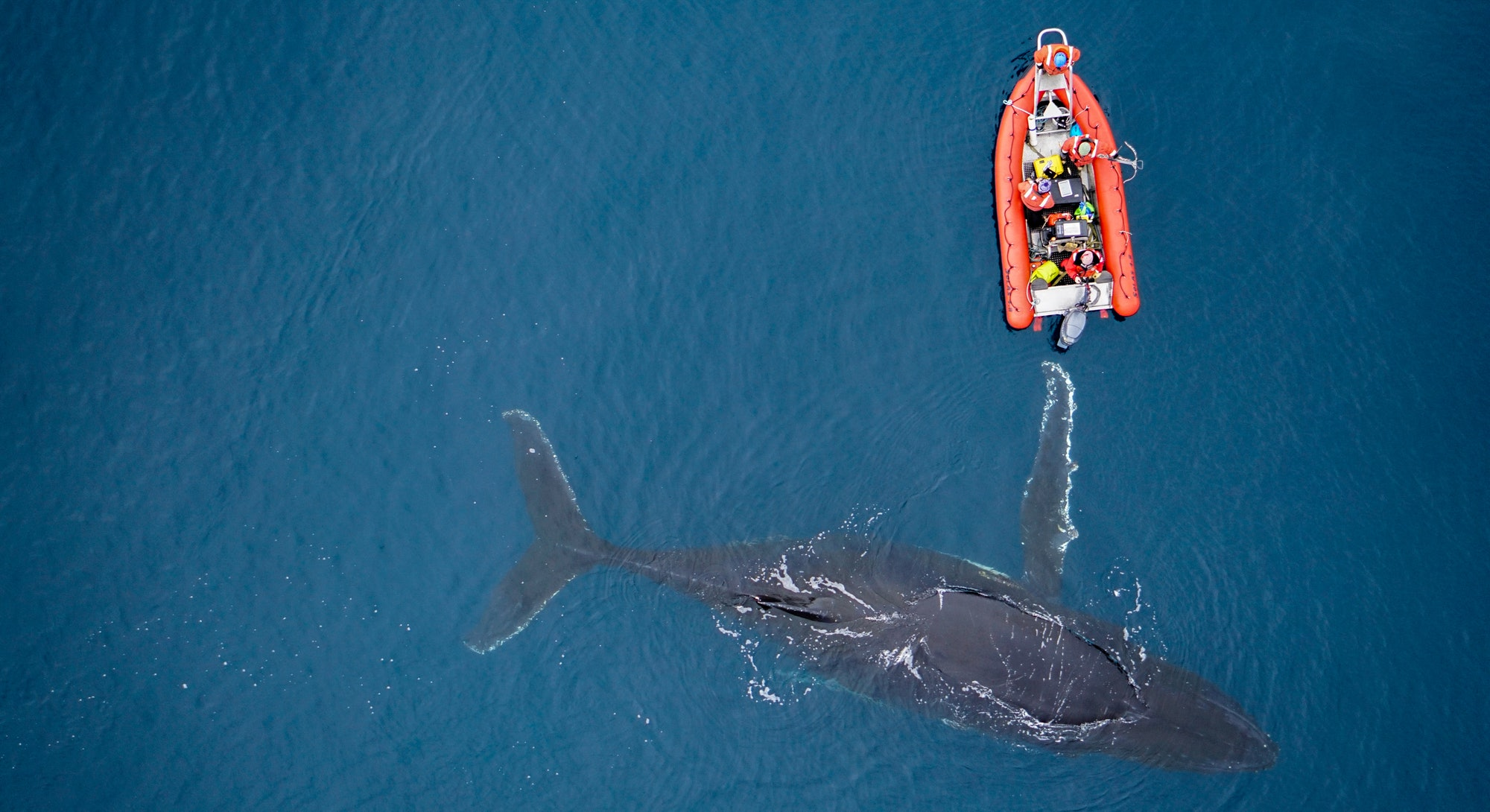 Humpback whale and researchers pictured from a drone