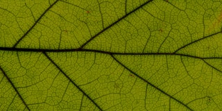 Green leaf texture, close-up.