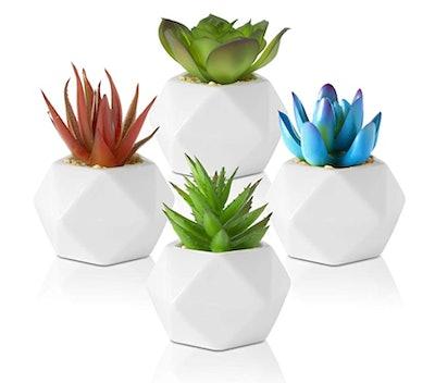 Set of 4 Mini Succulents