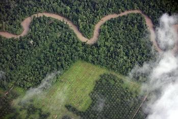 Palm oil plantation; deforestation