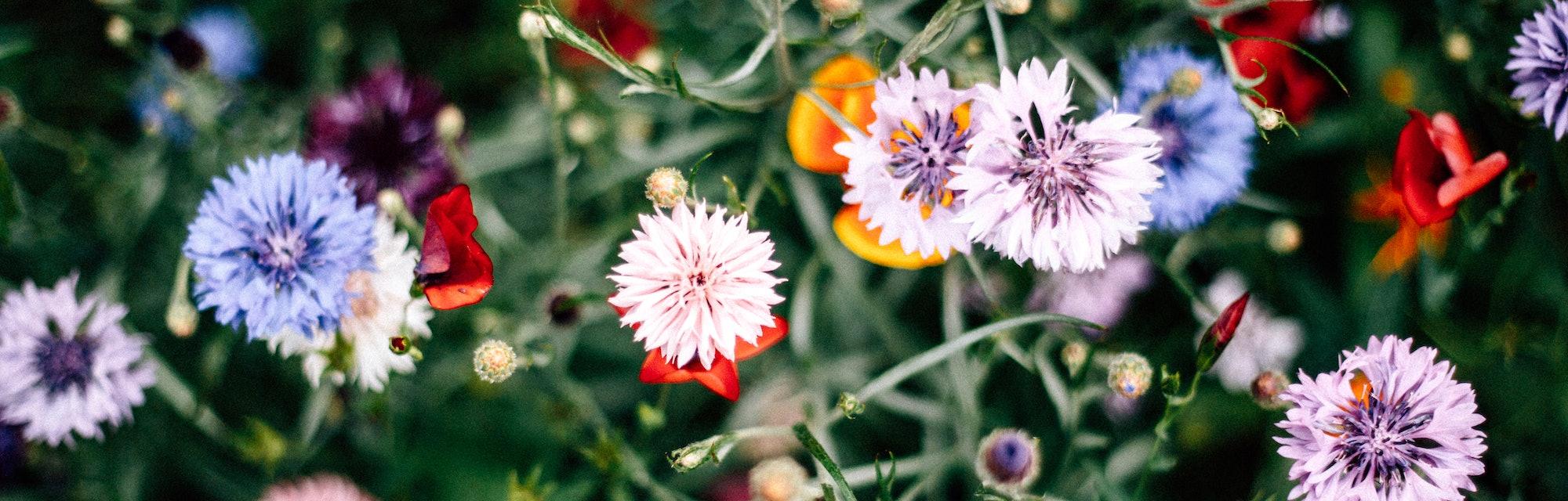 Bunte Blumenwiese flowers in a field