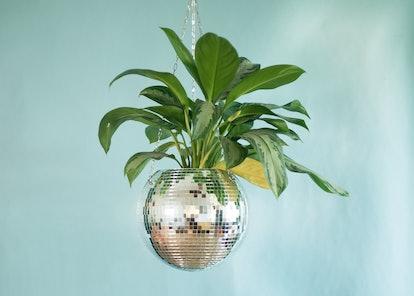 Dado Disco Ball Plant Hanger