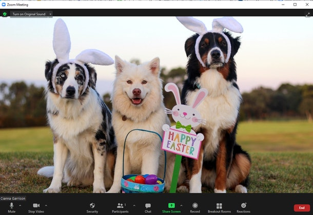 These Easter Zoom backgrounds include cute bunnies and chicks.