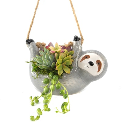 The Slouching Sloth Planter