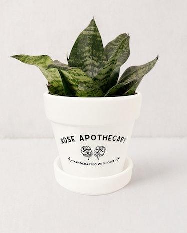Rose Apothecary Planter