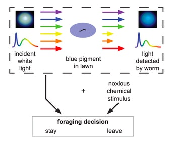 experiment, C. elegans