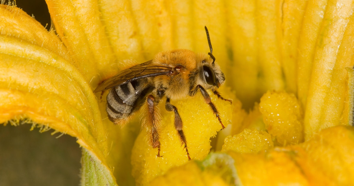 One human decision may be devastating bees