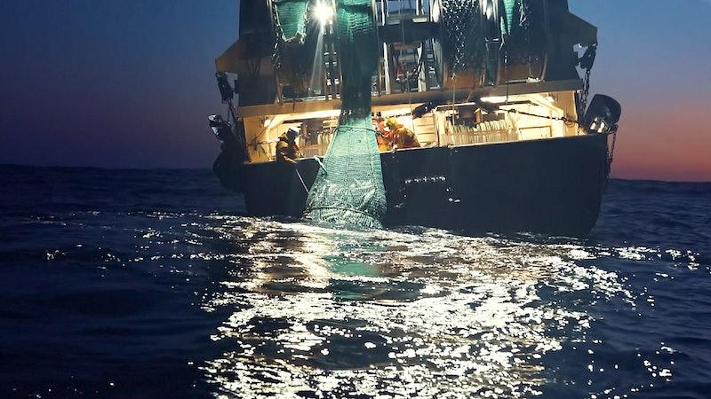 Footage taken by Sea Shepherd for Netflix's 'Seapiracy'