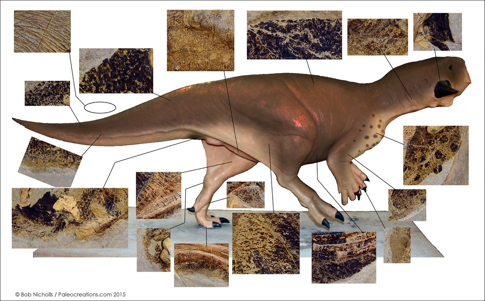 various color patterns for the Psittacosaurus