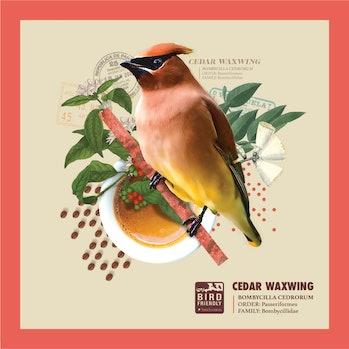 bird friendly coffee smithsonian waxwing