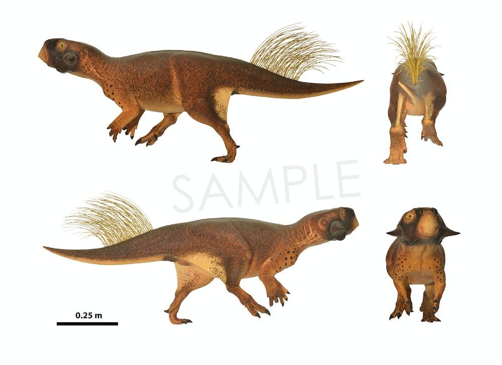 Psittacosaurus sample drawings