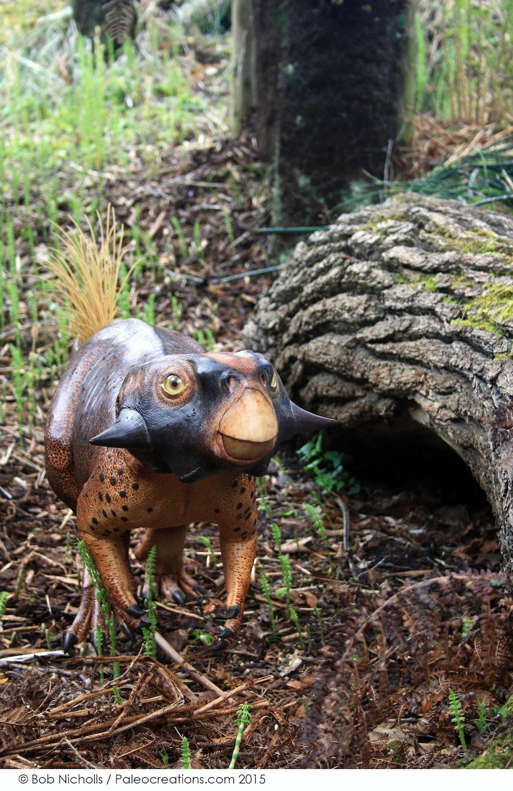 Pudgy Psittacosaurus display