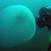 Scientists finally discover the origin of mysterious ocean orbs